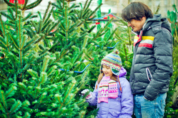 With the holiday season in full swing, the family Christmas tree is something you should start thinking about now. Hunting for the ideal tree can often feel ...