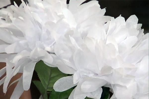 Diy Tissue Paper Flowers Cityline